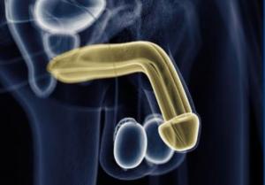II. Avrupa Üroloji Derneği Erektil Restorasyon ve Peyronie Hastalığı Kursu
